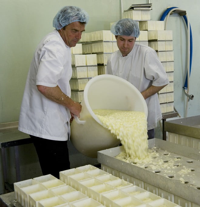 making-cheese-salting-shaping-curds-poured-into-soft-cheese-moulds